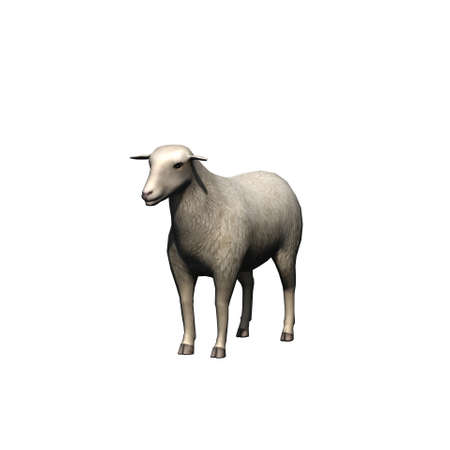 Farm animals - sheep - isolated on white background - 3D illustration