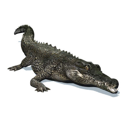 Wild animals - crocodile with shadow on the floor - isolated on white background - 3D illustration Stock fotó