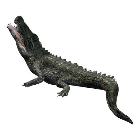 Wild animals - crocodile - isolated on white background - 3D illustration