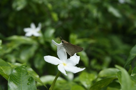 insecta: An Insect on a White Flower Stock Photo