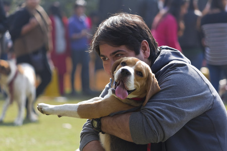 cuddled: A Beagle Dog Cuddled by its Owner at PetFed 2015 in New Delhi, India. Editorial