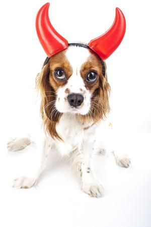 Duivel hond illustratie. King Charles Spaniel met Devil Hat. Duivelshond. Carnaval kwaad duivelskostuum. Oudjaarsavond. maskerade Sylvester duivel hond.