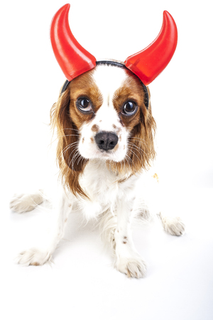 Devil dog illustration. King Charles Spaniel with Devil Hat. Devil dog. Carnival evil devil costume. New Years Eve. masquerade Sylvester devil dog.