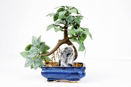 artsy: Bonsai plastic decoration on white background. Stock Photo