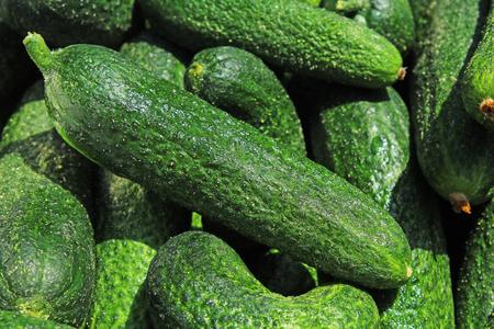 生きゅうりの緑の野菜。背景として生漬物。緑のピクルス模様。 写真素材