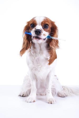 Dog pet animal vaccination in syringe. Dog holding syringe vaccination.