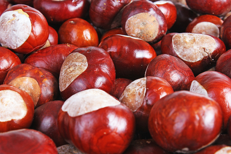 Chestnut background. Chestnuts as texture pattern cover wallpaper. Wild chestnuts whole brown autumn background. Fall autumn chestnut texture wallpaper. Archivio Fotografico