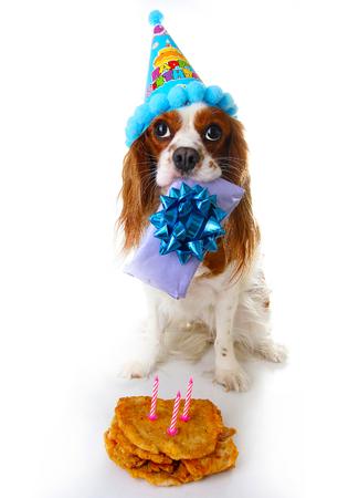 Happy birthday dog photo. Cavalier king charles spaniel puppy dog celebrate 3. birthday. Three years old puppy with birthday cake and gift. Dog holding gift on white background. Stock Photo