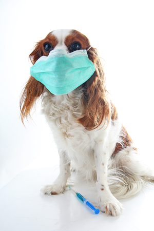Sick dog puppy photo illustration. Animal pet doctor vet mask on puppy. Dog with injection vaccination. 写真素材