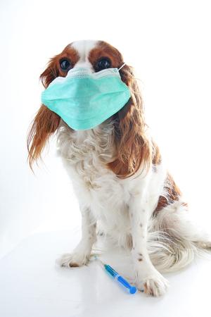 Zieke de fotoillustratie van het hondpuppy. Dierlijke dierenarts dierenarts masker op puppy. Hond met injectie-vaccinatie. Stockfoto
