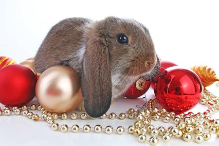 Christmas animals. Cute christmas rabbit. Rabbit bunny lop celebrate christmas with xmas bauble ornaments on isolated white studio background. Christmas pet animal photo. Cute. Reklamní fotografie