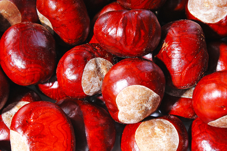 Brown wild chestnuts. Chestnut closeup pattern texture as background. Macro photo.