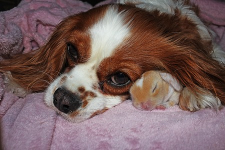 Dog and baby rabbit together. animal friendship. Cute animals.