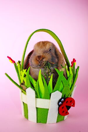 Easter bunny rabbit cute lop pet rabbits. Cute easter animal