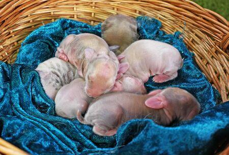 Rabbit Newborn Rabbits Pets Animals Cute New born Animal