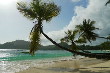 Three beautiful coconut palms hanging over tropical beach Anse Intendance, Mahe Island, Seychelles photo