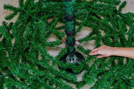 Assembling green Christmas tree inside house. Female hand adding artificial branches to shape a festive pine tree on a stand.