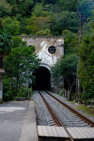 Railroad tracks entering an old tunnel overgrown with green plants.