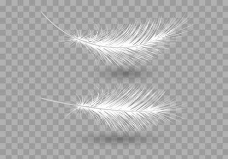 Soft Feather with isolated background