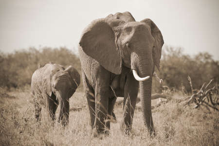 Little elephantwith mother Stock Photo - 12981779