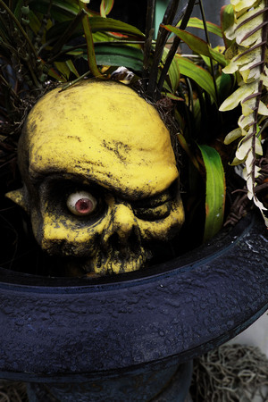 awful: Yellow Fake Fossil skulls in dark blue and purple pot with leaves