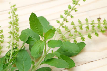 admixture: stalks,leaves and flower of basil on wood background Stock Photo