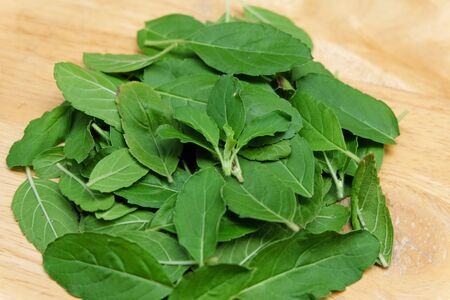 admixture: Part of Holy basil pile on wooden floor Stock Photo