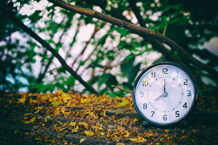 essays: black table clock shown 8.00 AM with trees,leaves and branches background on dry leaves on wood ground(darken at the edge around of frame) Stock Photo