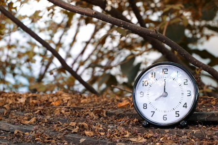 essays: black table clock shown 8.00 AM with trees,leaves and branches background on dry leaves on wood ground (autumn season tone)