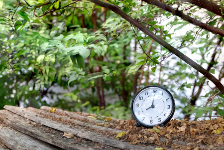 black table clock shown 8.00 AM on wood ground steps with dry leaves and trees,leaves and branches background