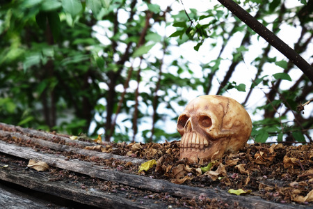newness: head skull with dry leaves piles on wood ground steps with trees,leaves and branches background (low key filter)