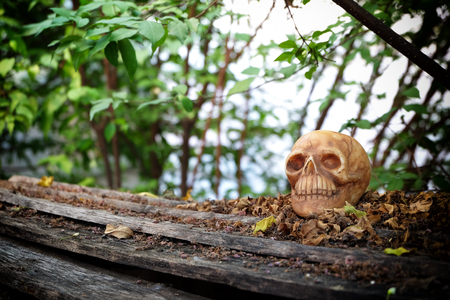 newness: head skull with dry leaves piles on wood ground steps with trees,leaves and branches background(darken around the edge of frame)