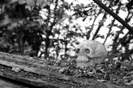 newness: head skull with dry leaves piles on wood ground steps with trees,leaves and branches background (black and white)