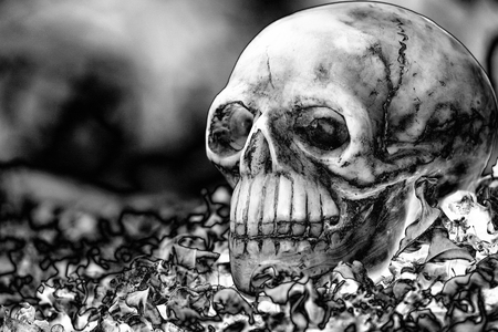 newness: head skull on dry leaves piles with dark background in black and white tone (solarization filter)