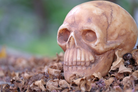 newness: head skull on dry leaves piles with black green background Stock Photo