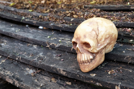 newness: head skull with dry leaves piles on wood ground steps (low key filter)