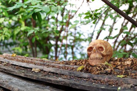 newness: head skull with dry leaves piles on wood ground steps with trees,leaves and branches background