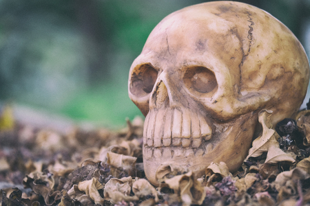 newness: head skull on dry leaves piles with black green  background