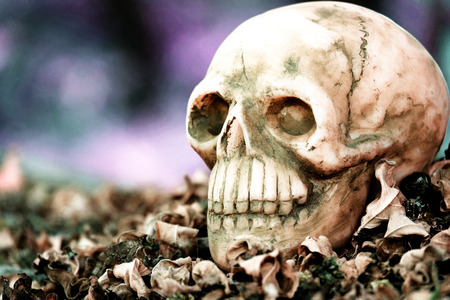 newness: head skull on dry leaves piles with black purple green background Stock Photo
