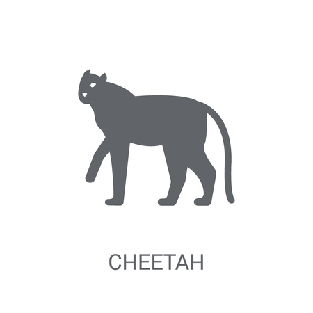Cheetah icon. Trendy Cheetah logo concept on white background from animals collection. Suitable for use on web apps, mobile apps and print media.