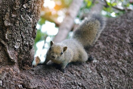 A brown squirrel is walking on a tree. Bright eyes look happy. 写真素材