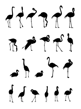 wader: collection of flamingo silhouettes on white background