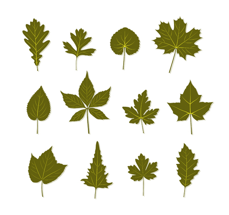 collection of leaves on white background