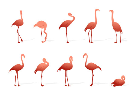 wader: collection of flamingos on white background