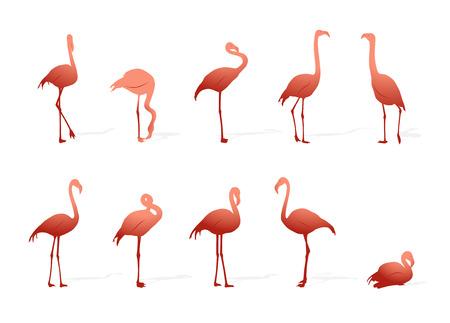 flamingos: collection of flamingos on white background
