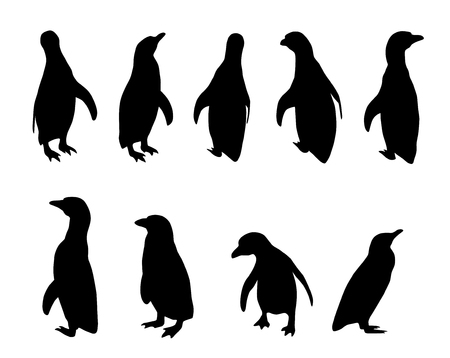 vector penguin silhouettes on white background (Spheniscus humboldti)