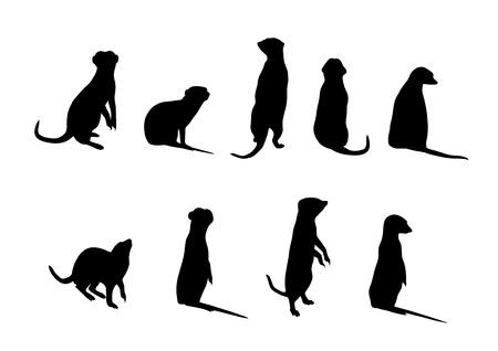 carnivoros: siluetas de Suricata (Suricata orca) sobre fondo blanco