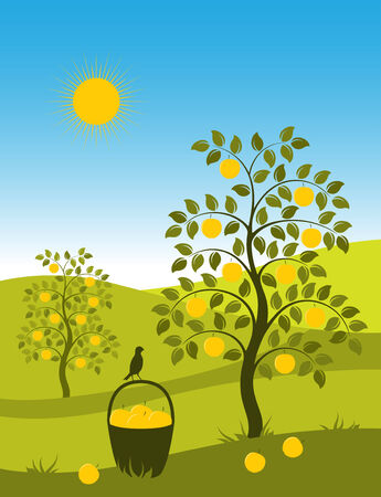 landscape with apple trees and basket of apples Vector