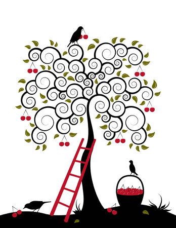 canasta de frutas: Cerezo, escalera, aves y canasta de cerezas sobre fondo blanco