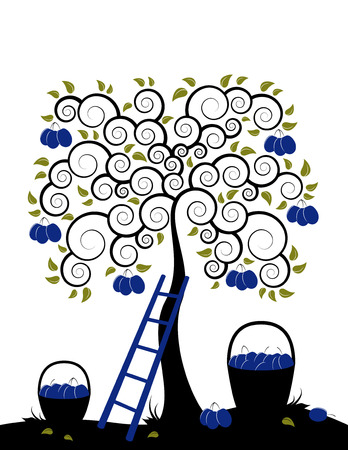 plum tree, ladder and baskets of plums on white background Stock Vector - 7157792